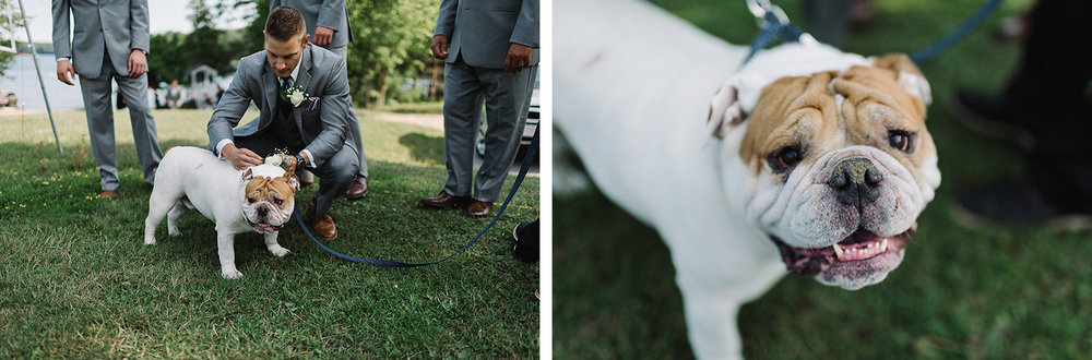 14-muskoka-wedding-photographer-toronto-wedding-photography-hidden-valley-resort-documentary-photojournalistic-ceremony-groom-putting-on-boutineer-for-the-dog-bulldog-ring-bearer.jpg