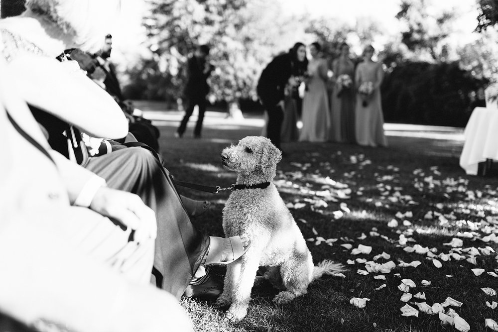 ceremony-bride-and-groom-dog-hanging-out-At-Eganridge-Resort-Venue-Muskoka-Ontario-Wedding-Photography-by-Ryanne-Hollies-Photography-Toronto-Documentary-Wedding-Photographer.jpg