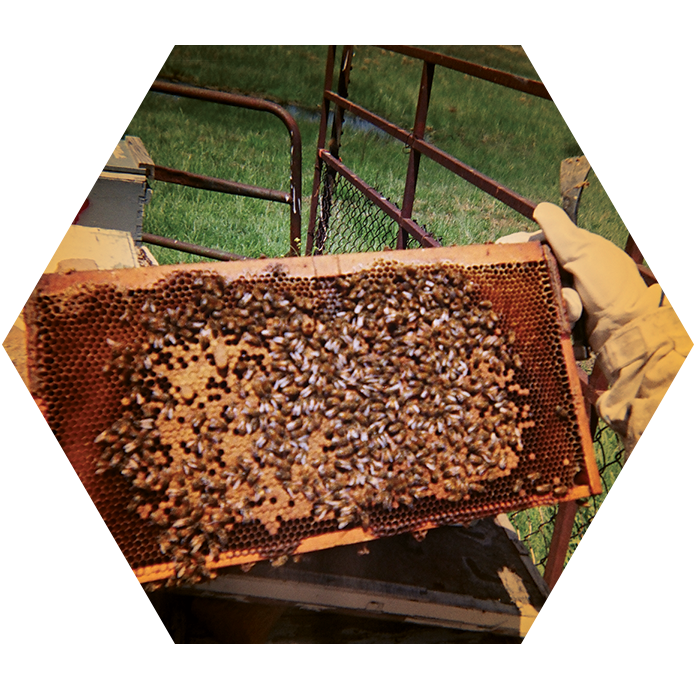 holding-honeycomb-2.png