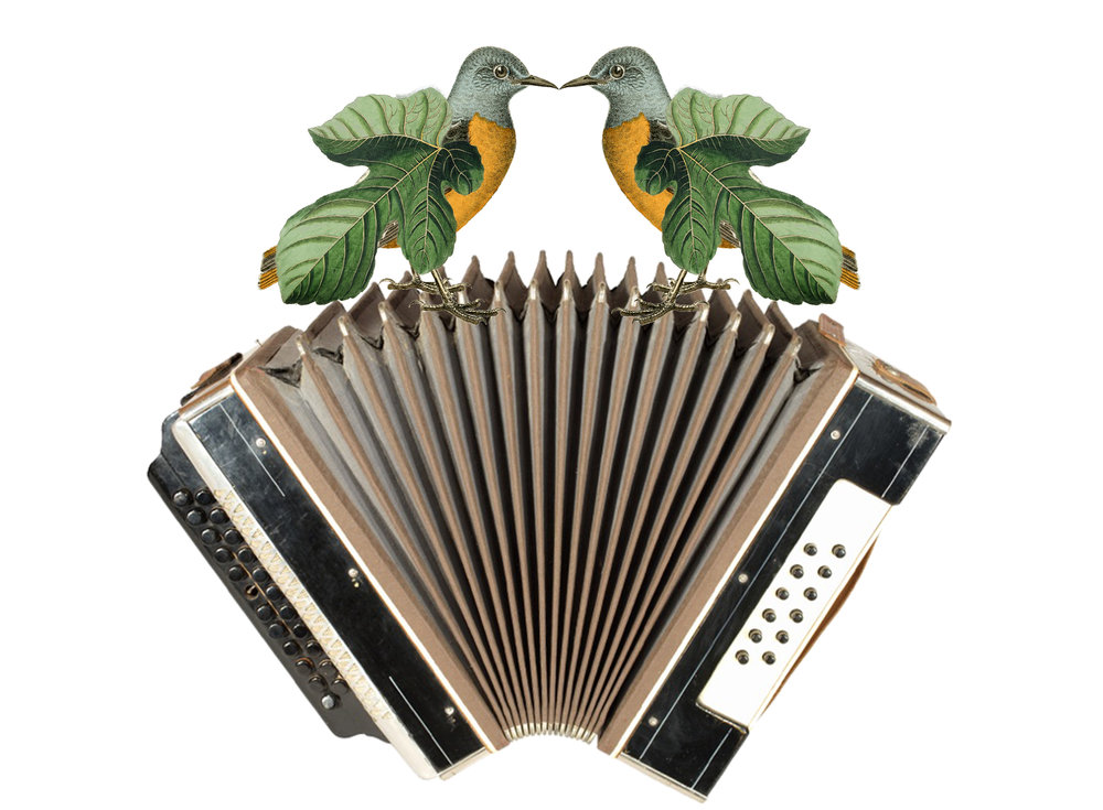 birds_accordion.jpg