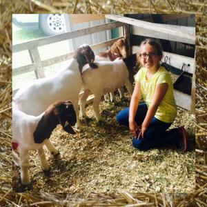 fair-goats.png