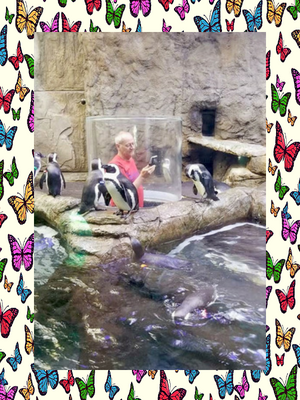 aquarium-tennessee-penguins-cloggers.png