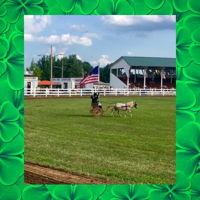 4-H-pony-flag-county-fair.png