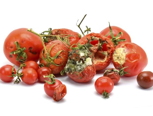 critics fans and the rotten tomatoes problem phoenix critics circle