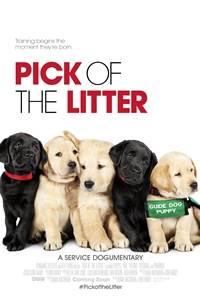 Pick of the Litter.jpg
