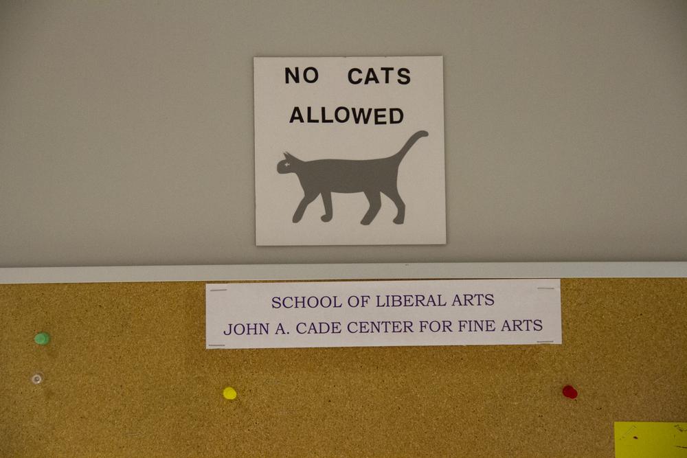 No Cats Allowed.jpg