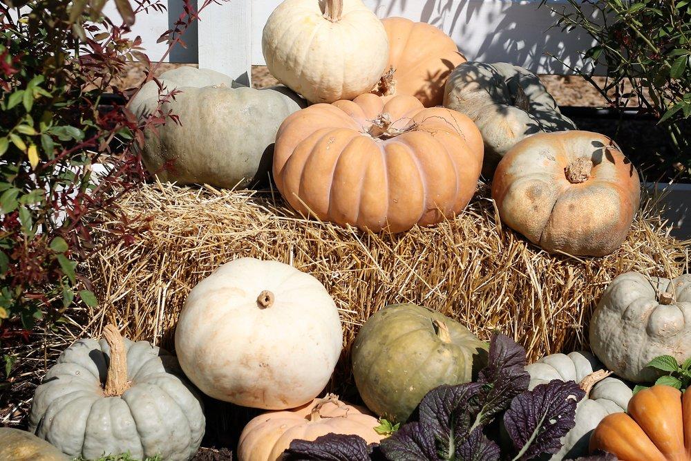love the multi-colored pumpkin display