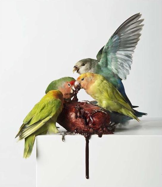 Myocardial Infarction, by  Polly Morgan , 2013  Taxidermy, resin plaster, glue, oil paint, ink 127cm x 38cm x 38cm