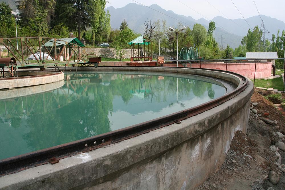 Water Plant Kashmir.JPG
