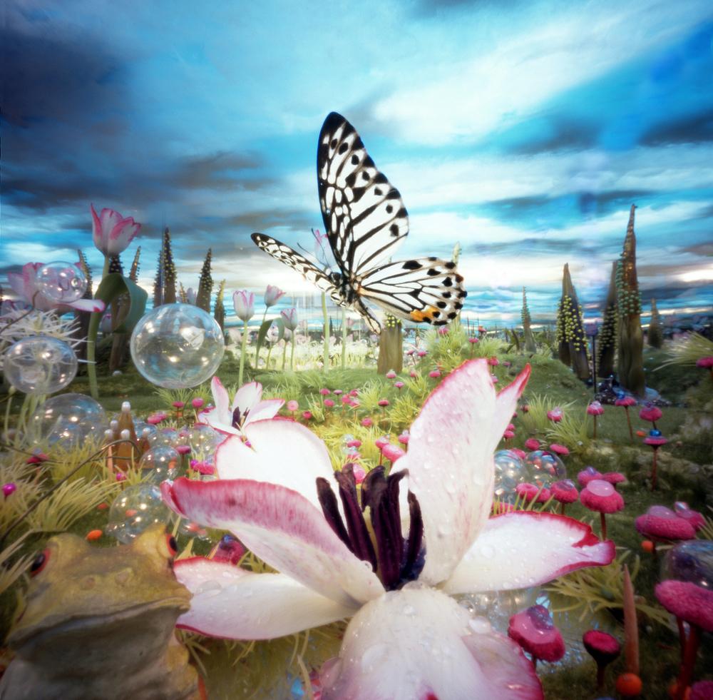 Tulpvlinder idea