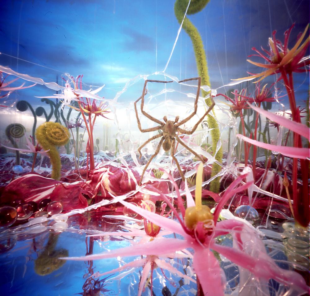 Spinneweb mist