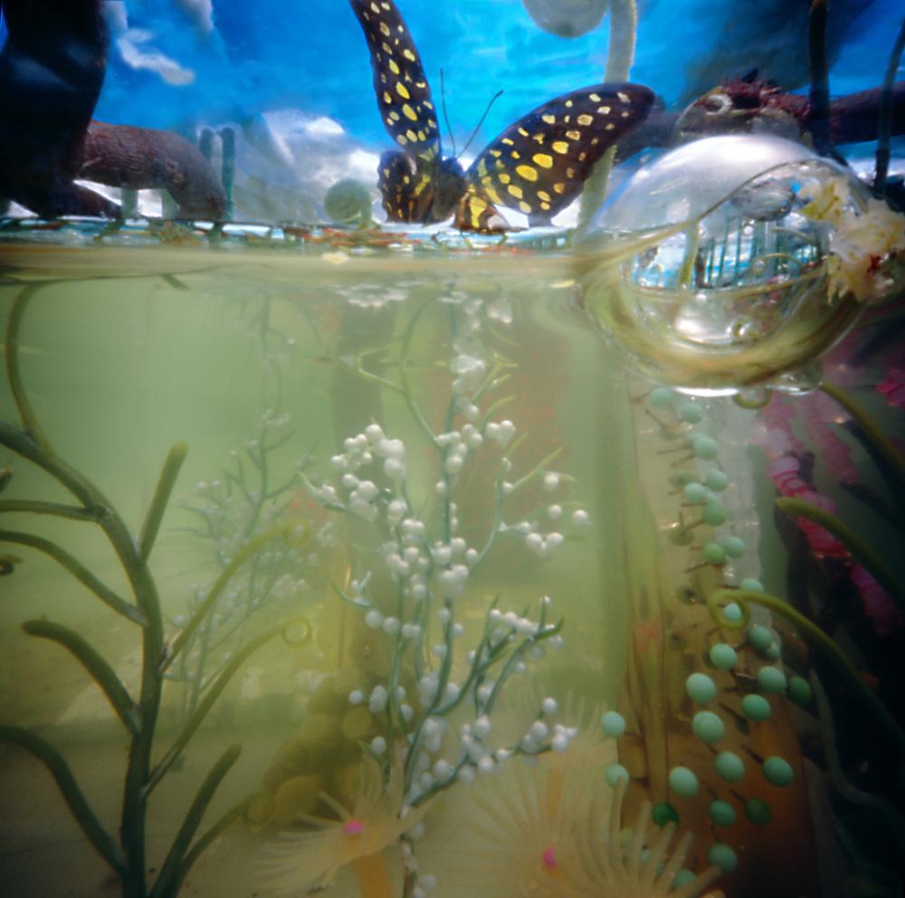 Watervlinder