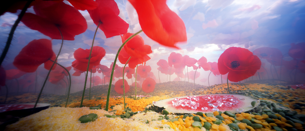Poppy Flowers Bethany De Forest