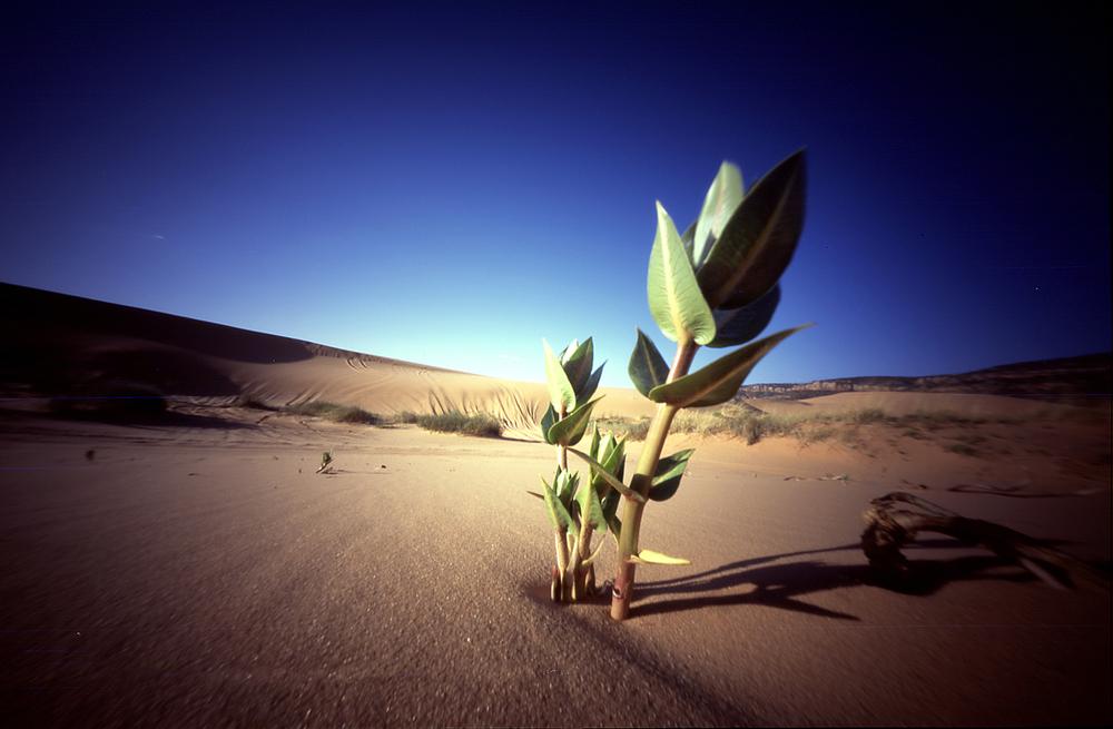 woestijnplant.jpg