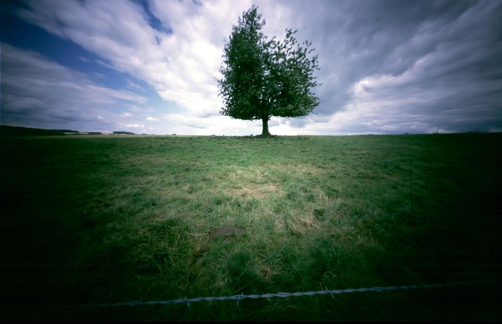 boom frankrijk.jpg