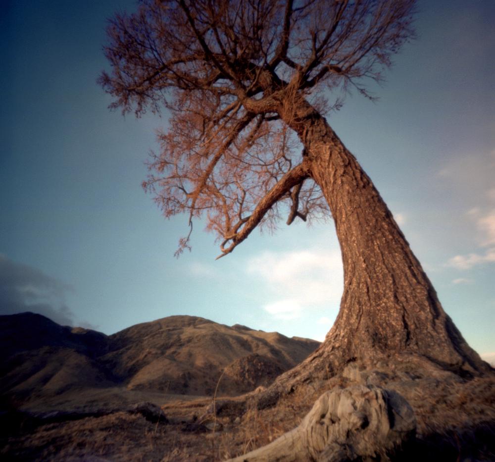 Heilige boom Mongolie.jpg