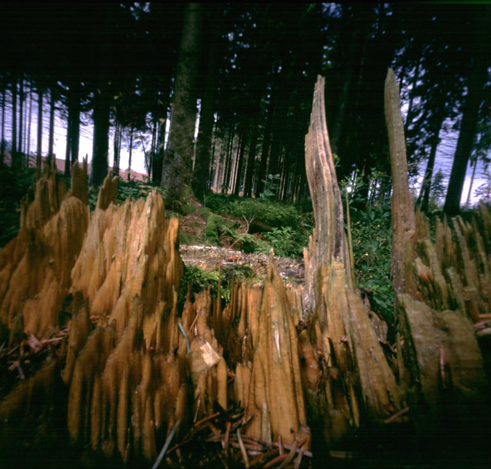 houtsnippers groot.jpg