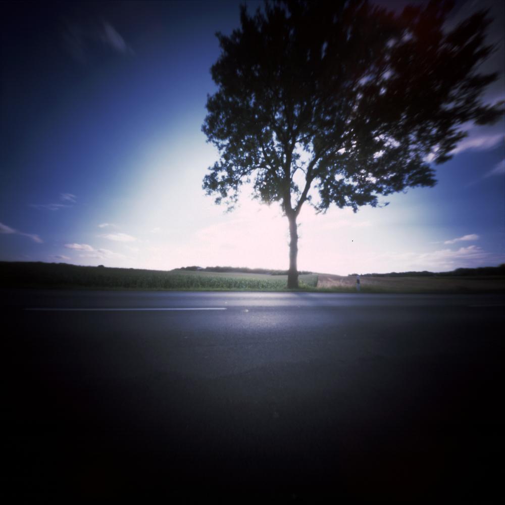 lichtboom.jpg