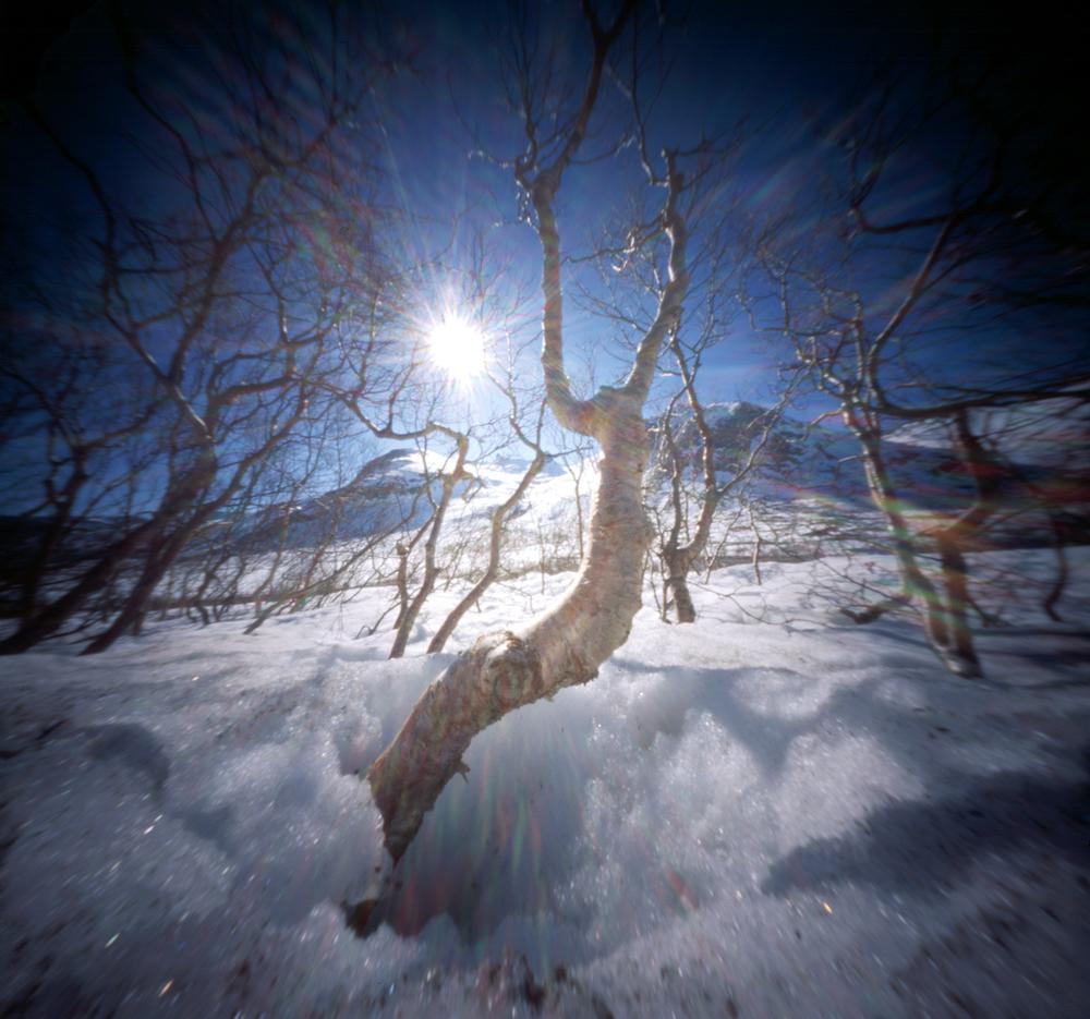 zonne bomen.jpg