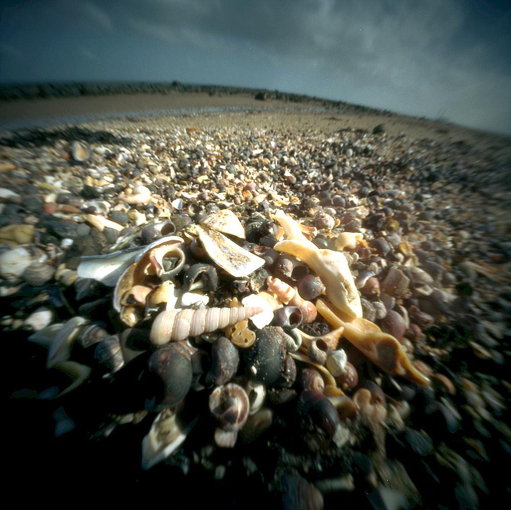 schelpjes.jpg