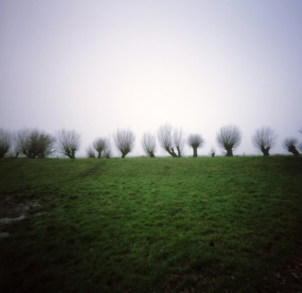 wilgen in de mist.jpg
