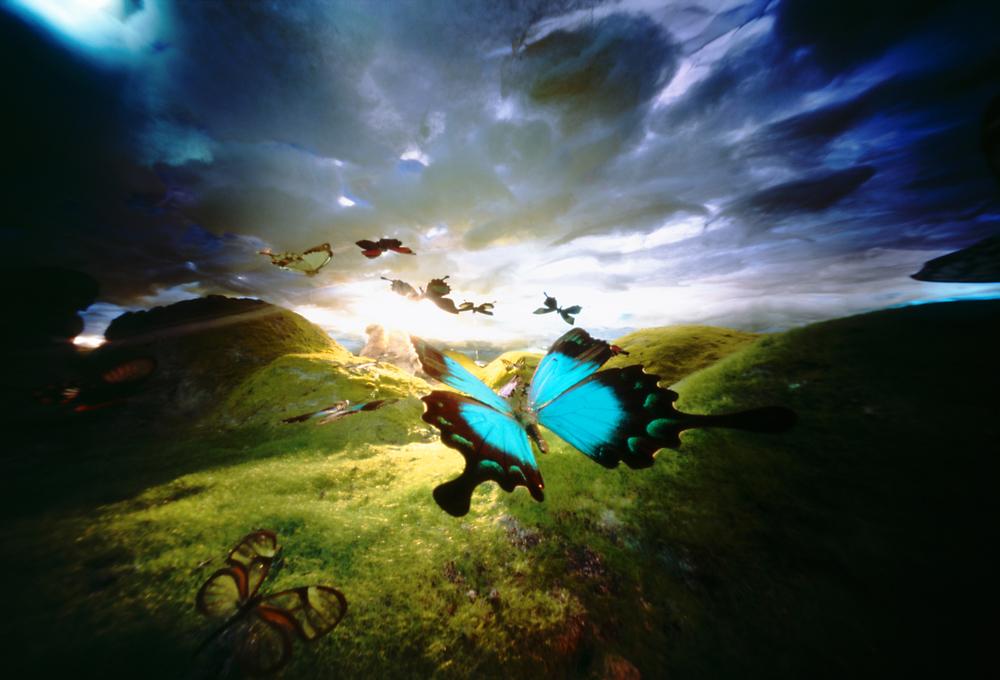 Vlindertrek