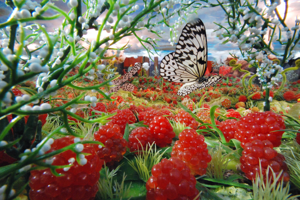 vlinders 3.jpg