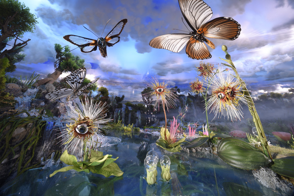 Eyeplants with butterflies 3