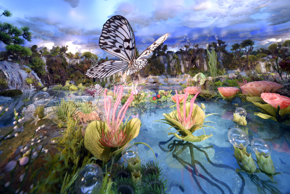 13 Lake butterfly