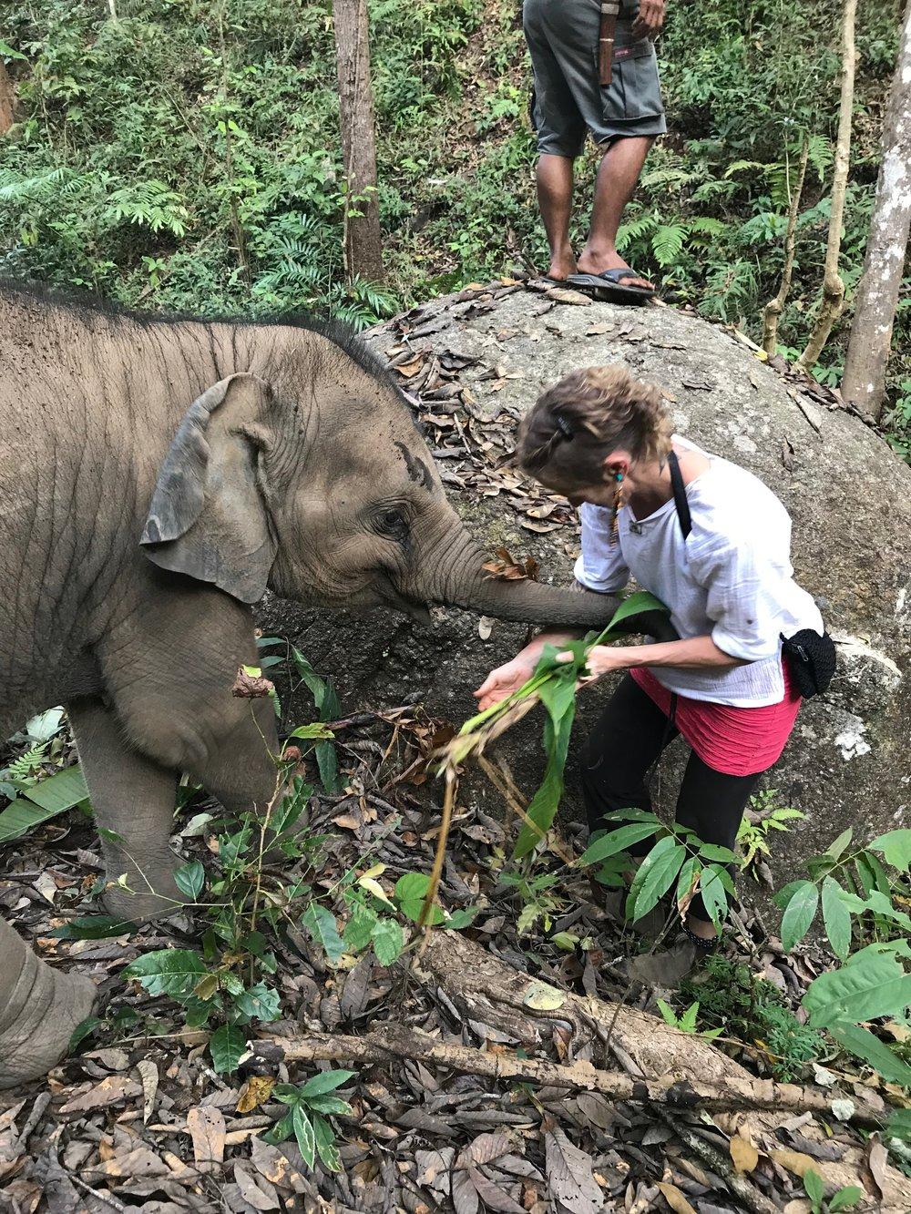Thailand Elephant Retreat - January 13-20th & January 20th-27th, 2019