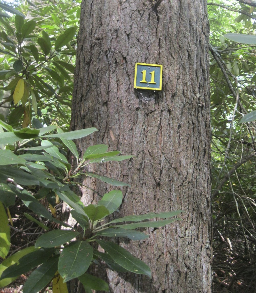 Jenkins Woods Interpretive Tree Guide - Naturalist John Serrao has written an interpretive hiking guide to the Jenkins Woods Trail. The guide serves as an educational tool for learning 15 different tree species, all of which are numbered for easy identification.