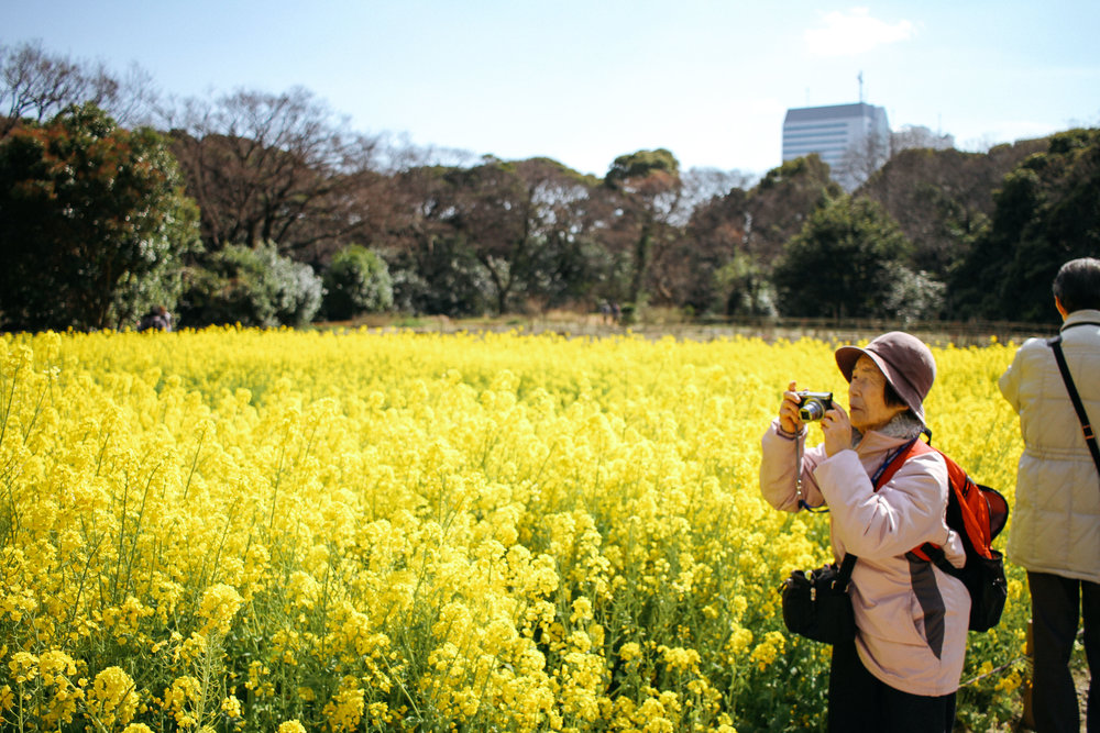 "OBAASAN  HAMARIKYU GARDENS - CHUO, TOKYO. I took this pic at the beginning of spring, when the yellow ""nanohana"" were in full bloom. I went to the gardens on my day off and wandered around for a few hours. There were a lot of people there snapping their pic of the massive bloom, but I got lucky when this obaachan stepped into my frame. This pic symoolizes a lot for me...mostly the incredible enthusiasm and activeness of the elderly generation here in Japan. Everywhere you go you will see groups of Ojiisans and Obaasans (Grandpas and Grandmas) taking photos and enjoying life just like the rest of us. Maybe it's the memories I grew up making with my own grandparents that makes a photo like this all the more special. My grandpa Ryo would always take 2 or 3 photos at our holiday parties with his old film camera...and my grandpa Sumio even had an iphone and used the computer every day. I miss them. I love them. They inspire me."