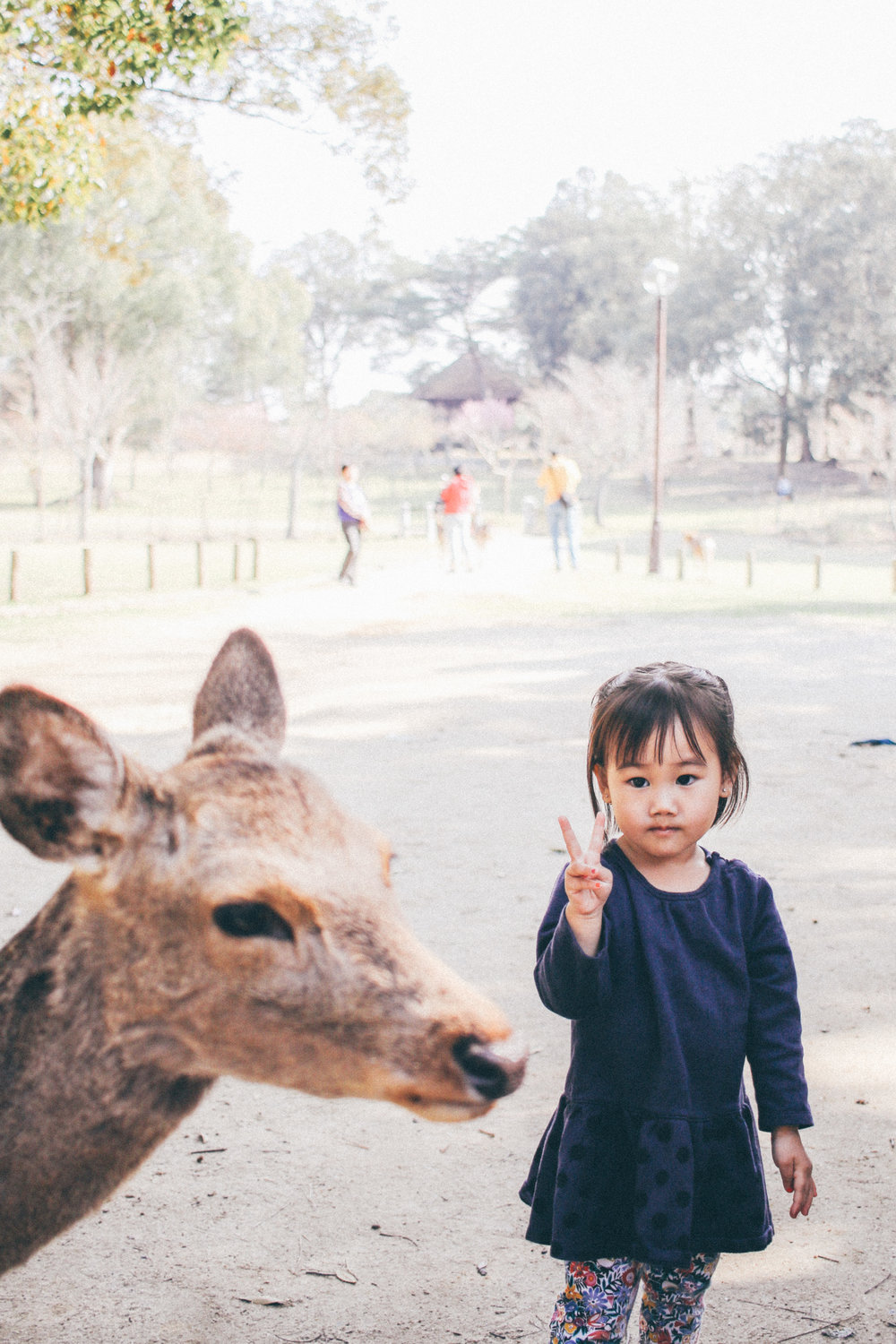 "5. NARA EDEN While in Kyoto with my fam, we took the trek out to Nara to show the kids the deer. I loved this moment when Eden was just standing there…staring at the deer in awe. She wasn't showing any fear, or shock, or concern…just that pure innocent curiosity. During our trip, she mastered the ""peace"" sign and would do it anytime I took a photo. precious!"
