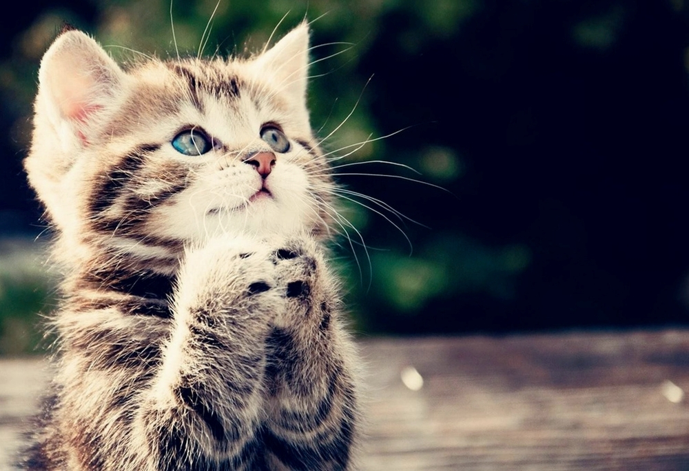 cute_cat_animal_picture.jpg