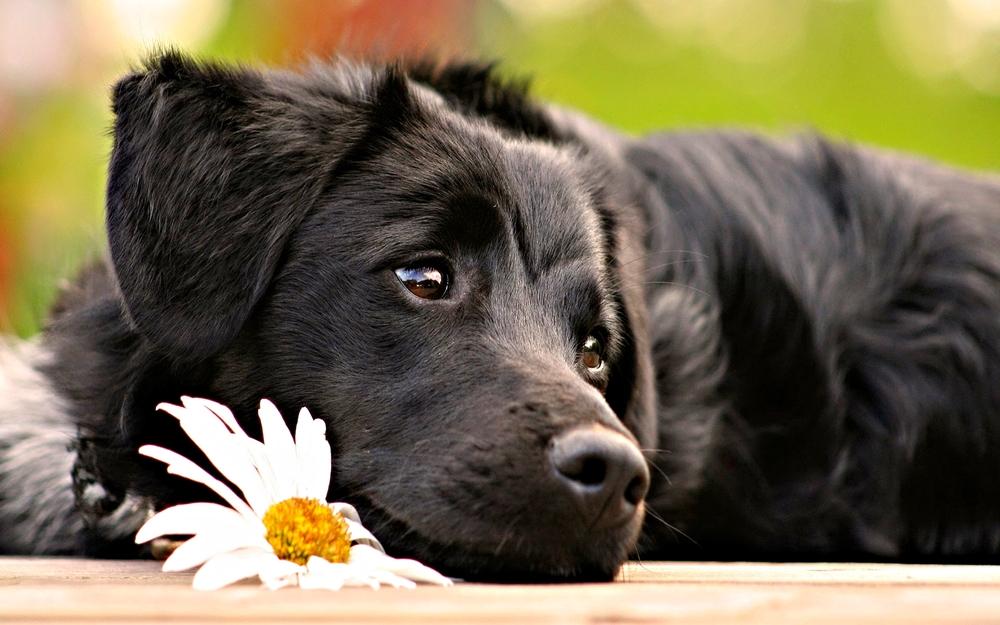 black-dog-high-resolution-14.jpg