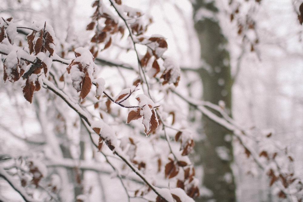 winter-19.jpg