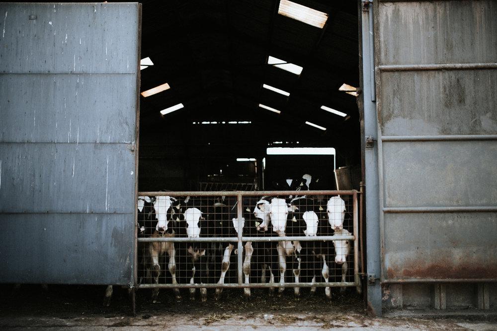 herefordshire-98.jpg