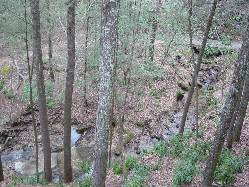 CO_Overlooking Creek_Jan_11009.jpg