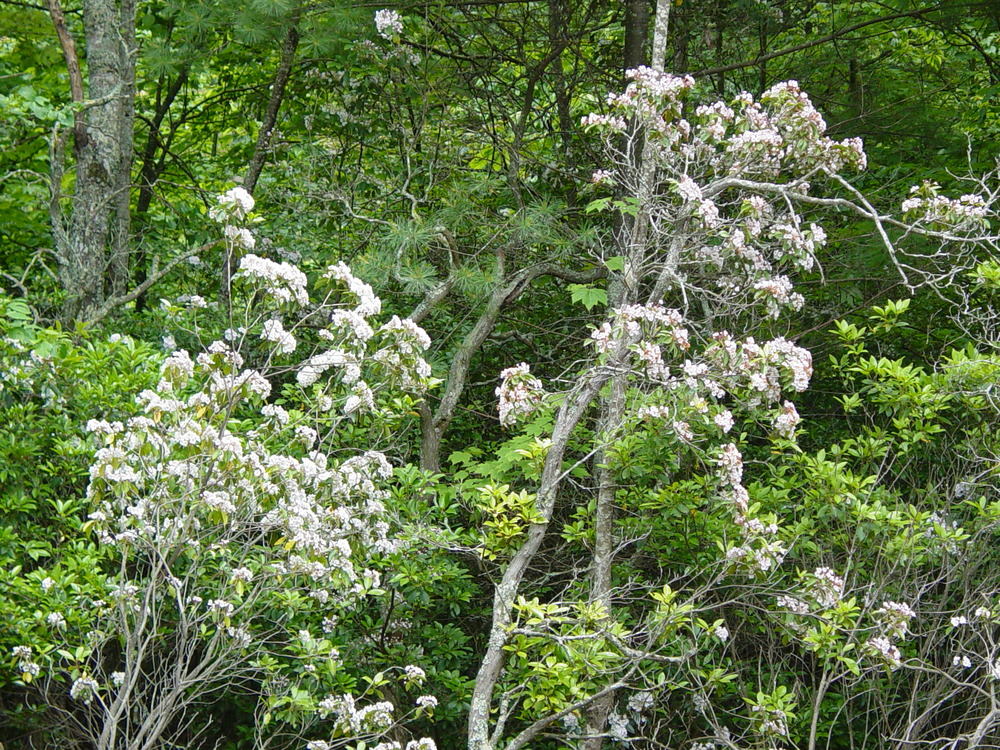 Spring Flowers 2003 002.jpg