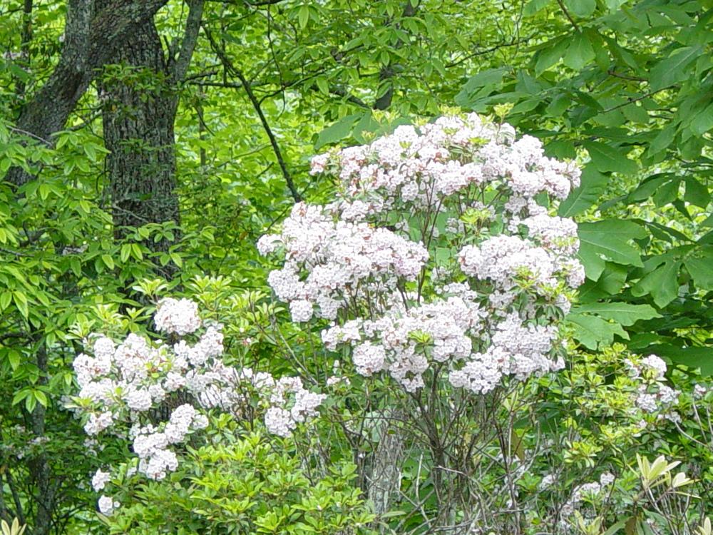 Spring Flowers 2003 003.jpg