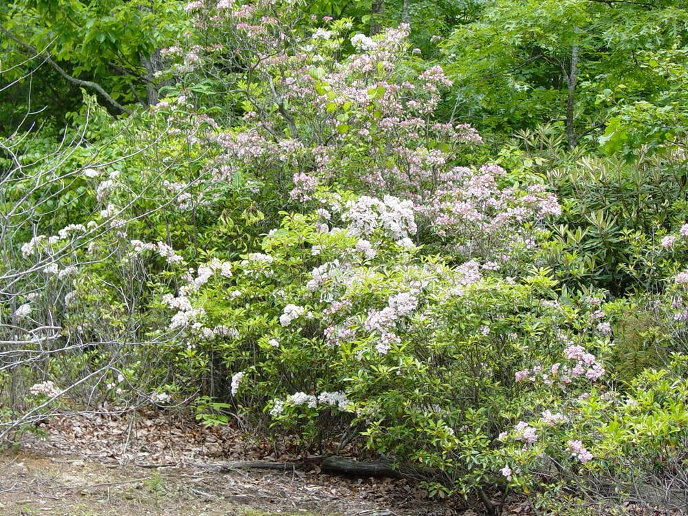 Spring Flowers 2003 004.jpg