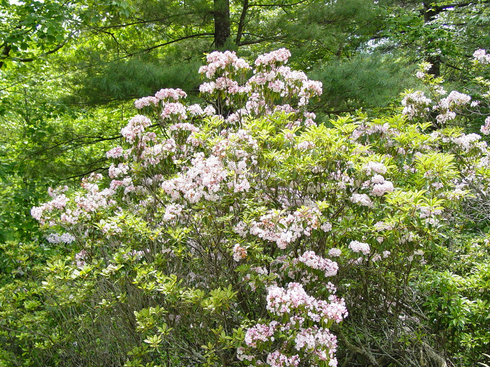 Spring Flowers 2003 012.jpg