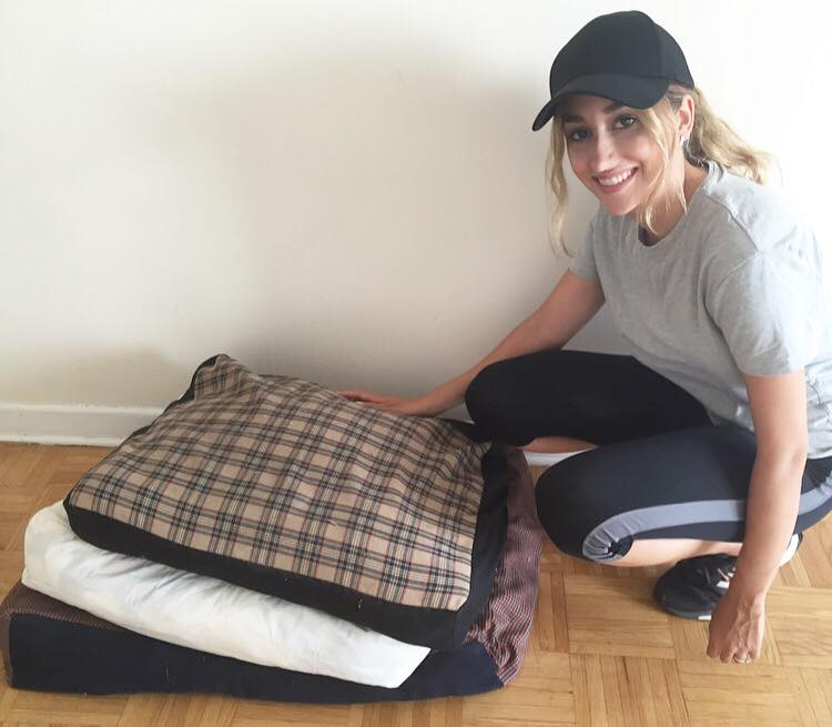 Donating pet beds to the toronto humane society
