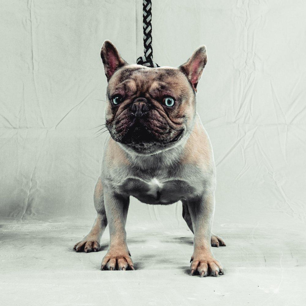 dogs (4 of 10).jpg