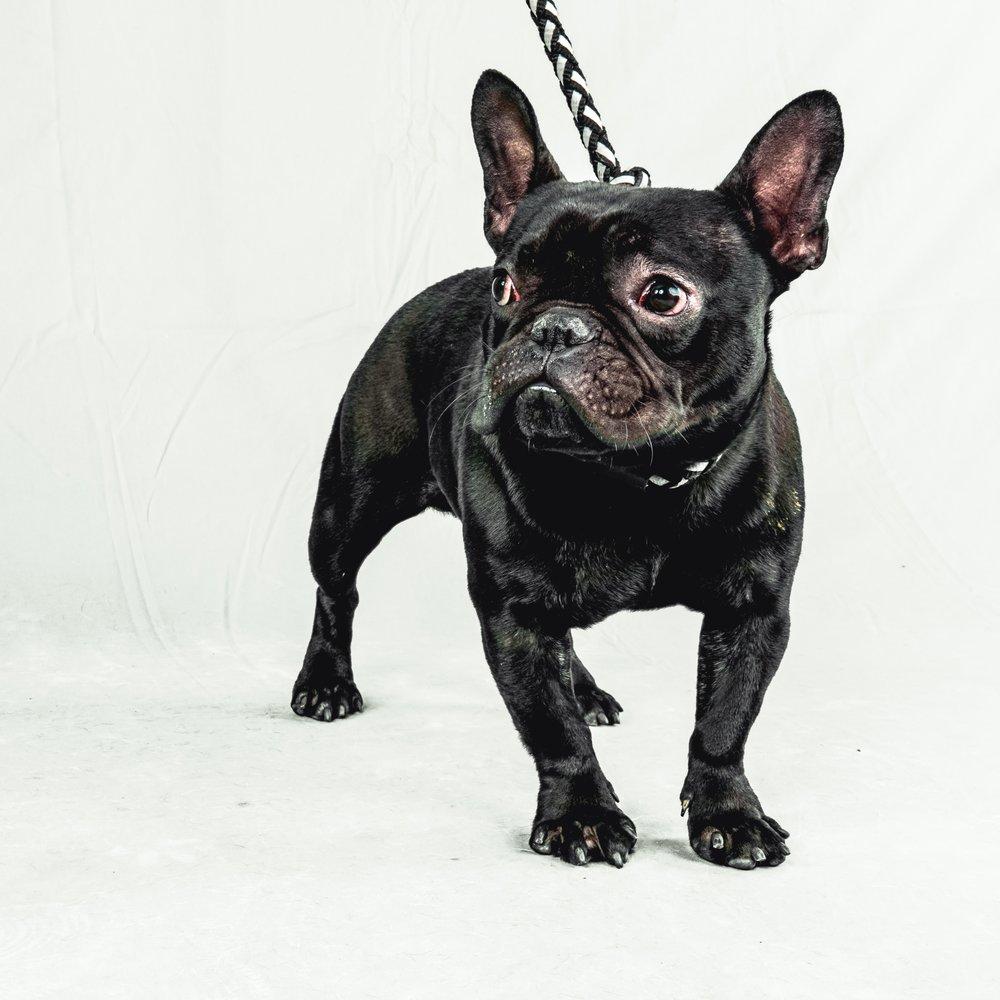 dogs (10 of 10).jpg
