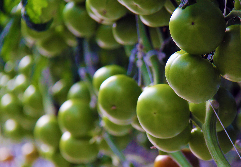 GREENHOUSE GROWER AMCO Produce – Produce Supervisor Job Description