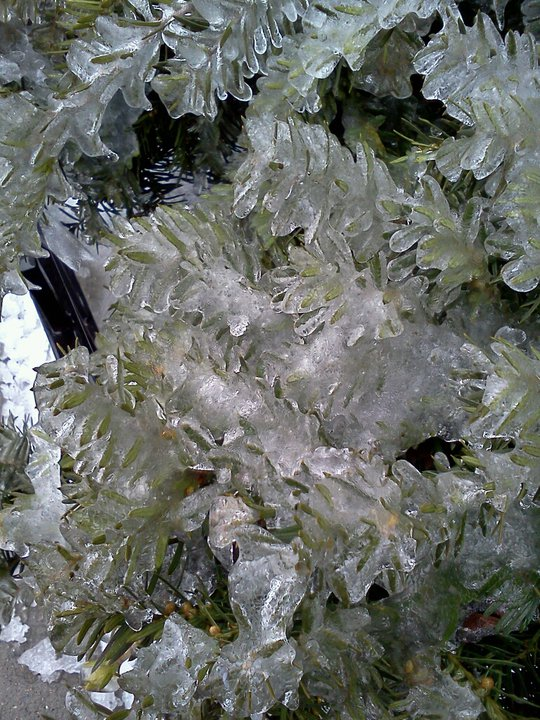 Frost on bush in Astoria, February 2011
