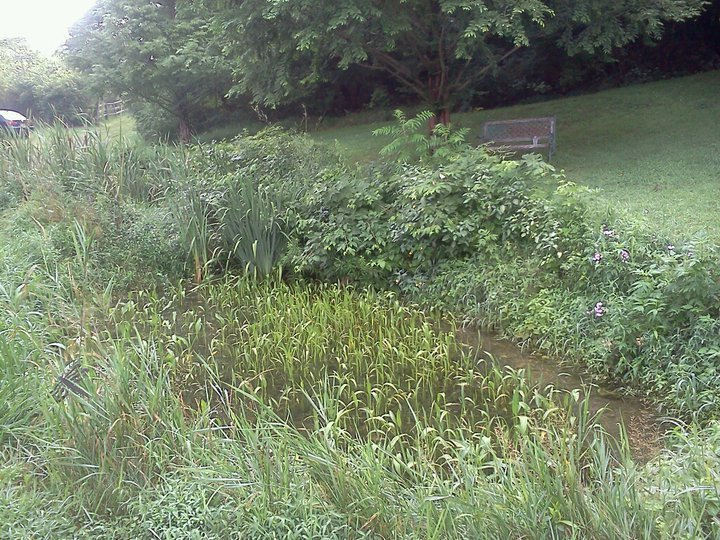 Little Pond, Bethlehem, PA, August 2011