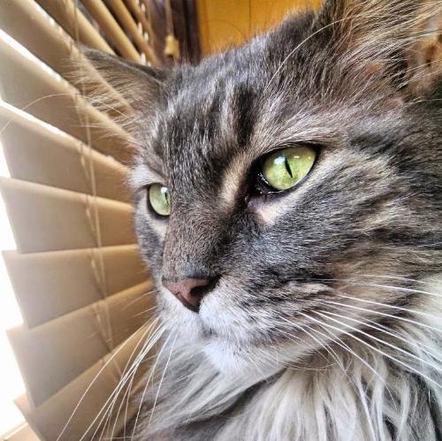A majestic feline by a window | Photo by Attiya Charrington