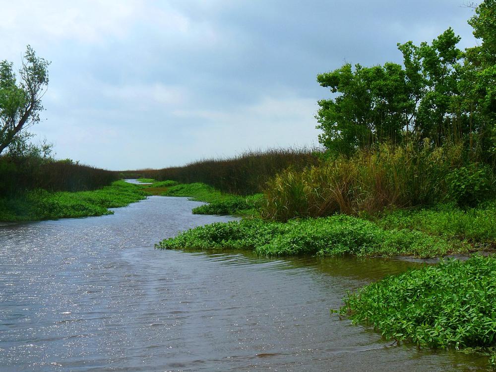 Environmental Investigation & Remediation Experts